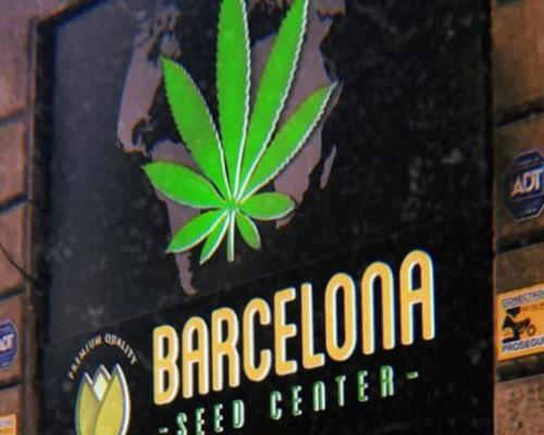 Cannabis Shop?