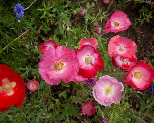 I fiori vi raccontano una storia