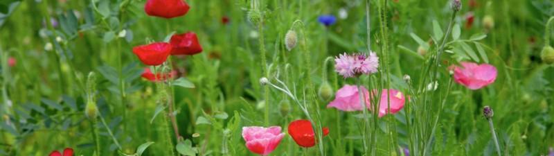 Fiori giardino primavera
