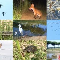 Il Progetto Biodiversità