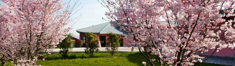 scuola esterno primavera